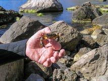 Caçador subaquático Foto de Stock Royalty Free