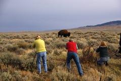 Caçadores do búfalo imagens de stock