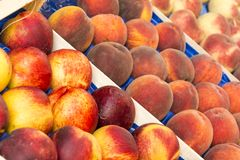 Caçarola do pêssego do fruto Imagens de Stock Royalty Free