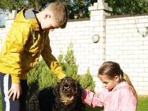 Caçoa trocas de carícias um cão Imagem de Stock Royalty Free