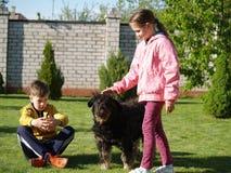 Caçoa trocas de carícias um cão Imagem de Stock