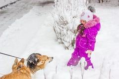 Caçoe a menina que joga com o cão do corgi no dia de inverno nevado branco foto de stock