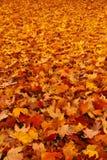 Caída - alfombra de las hojas de otoño imagenes de archivo