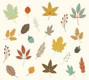 Caída Autumn Leaves Vector Set Fotografía de archivo