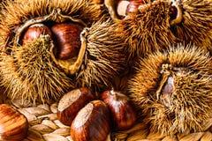 Caída Autumn Raw Food: Castañas Foto de archivo libre de regalías