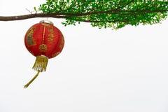 Caída china de la linterna con un árbol Imagen de archivo libre de regalías