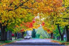 Caída colorida en Nuevo Brunswick, Canadá fotografía de archivo libre de regalías