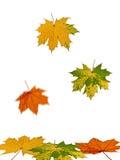 Caída de hojas coloridas otoñales Imagenes de archivo