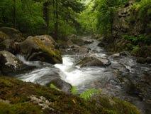 Caída de la cala de la montaña del bosque Foto de archivo libre de regalías