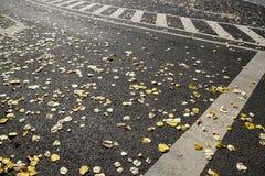 Caída de la ciudad Imagen de archivo libre de regalías