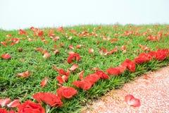 Caída de la flor de la rosa del rojo en el montón Imágenes de archivo libres de regalías