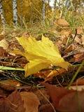 Caída de la hoja Imagen de archivo