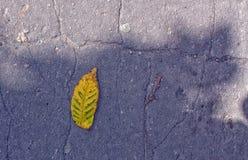 Caída de la hoja Fotografía de archivo libre de regalías