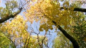 Caída de la hoja del otoño metrajes