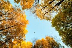 Caída de la hoja del otoño Fotos de archivo libres de regalías