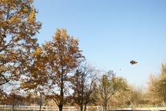 Caída de la hoja del otoño Fotografía de archivo