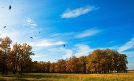 Caída de la hoja del otoño Foto de archivo