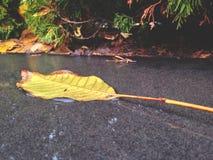 caída de la hoja del otoño, día después de la lluvia fotos de archivo libres de regalías