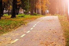 Caída de la hoja del otoño Hojas del amarillo en el lado del camino forestal Foto de archivo libre de regalías