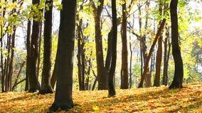 Caída de la hoja en parque del otoño almacen de video