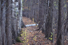 Caída de la hoja en parque del otoño Fotos de archivo