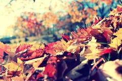 Caída de la hoja en parque del otoño Imágenes de archivo libres de regalías