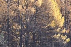 Caída de la hoja en parque del otoño Fotografía de archivo