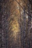 Caída de la hoja en parque del otoño Imagen de archivo