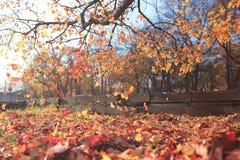 Caída de la hoja en parque del otoño Fotos de archivo libres de regalías
