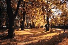 Caída de la hoja en parque del otoño Foto de archivo