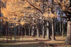Caída de la hoja en parque del otoño Imagen de archivo libre de regalías