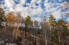 Caída de la nieve de las montañas de la cuesta de los árboles Fotos de archivo