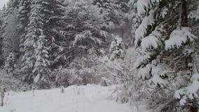 Caída de la nieve en bosque de la montaña metrajes