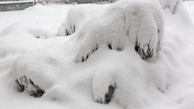 Caída de la nieve y depósitos de la nieve en arbustos almacen de metraje de vídeo