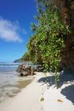 Caída de la planta del arrastramiento de la orilla de mar abajo de rocas Imagen de archivo