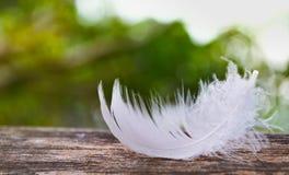 Caída de la pluma blanca en la madera Fotos de archivo
