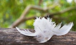 Caída de la pluma blanca en la madera Fotografía de archivo libre de regalías