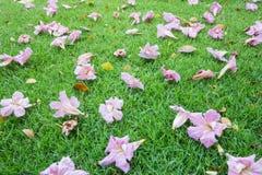 Caída de las flores en césped Fotografía de archivo libre de regalías