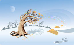 Caída de las hojas Imagen de archivo