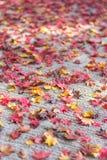 Caída de las hojas de arce en la tierra fotografía de archivo libre de regalías
