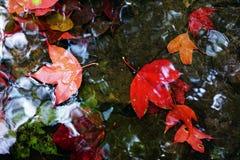 Caída de las hojas de arce rojo en el agua Foto de archivo libre de regalías