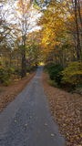 Caída de las hojas de otoño del camino de tierra Fotos de archivo libres de regalías