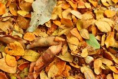 Caída de las hojas de otoño en la tierra Imagen de archivo libre de regalías