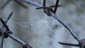 Caída de las hojas del alambre de púas almacen de metraje de vídeo