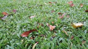 Caída de las hojas en el césped Foto de archivo libre de regalías