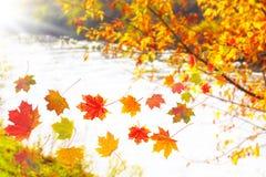 Caída de las hojas, otoño Foto de archivo