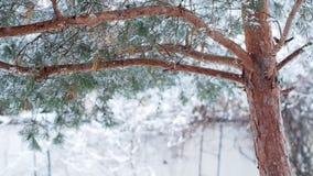 Caída de las nevadas fuertes almacen de metraje de vídeo