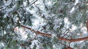 Caída de las nevadas fuertes almacen de video