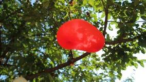 Caída de los balones de aire en una rama de árbol almacen de metraje de vídeo