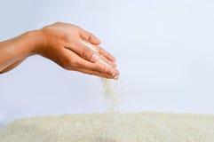 Caída de los granos del arroz Imagen de archivo libre de regalías